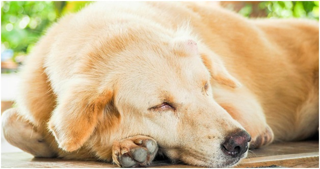 A Guide to CBD Oil For Dogs With Cancer