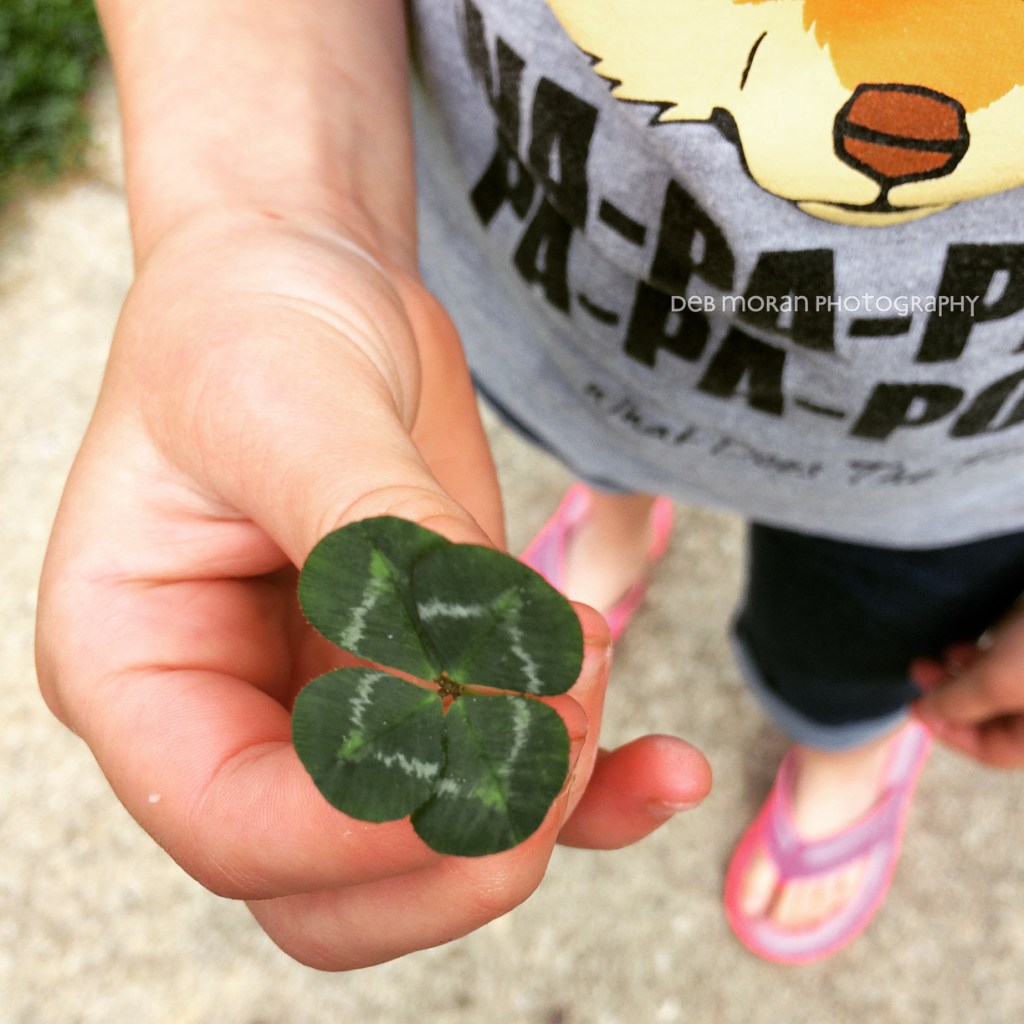 I'm looking over a four leaf clover... This is the fifth one that The Girl has found since Saturday. #cy365