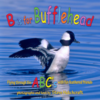 B Is For Bufflehead, ABC Book, Steve Hutchcraft