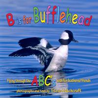 B Is For Bufflehead, ABC Book, Steve Hutchcraft