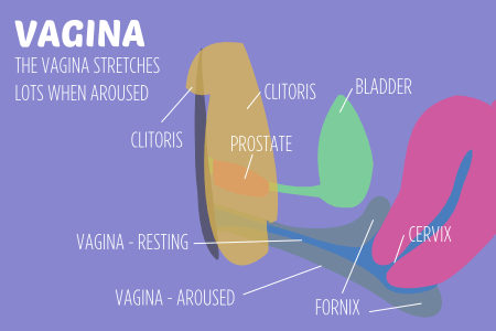 How the vagina works. The vagina stretches and doubles in size when aroused and can become wet.