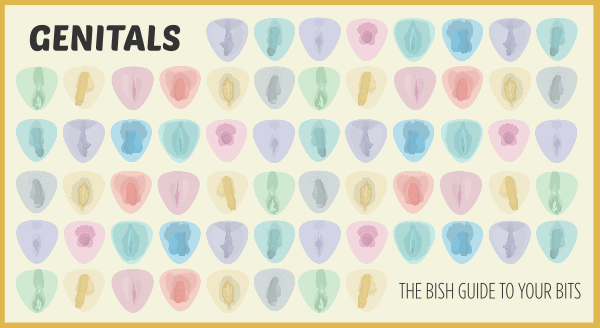 Genitals -- the Bish Guide to Your Bits