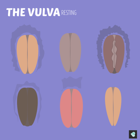 Image of the vulva. Drawings of different vulvas in resting state