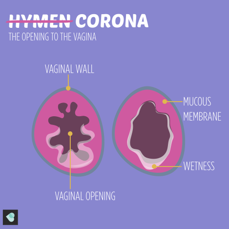 Image of the hymen or the corona. This is mucous membrane which surrounds the opening to the vagina