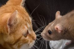 The Darknet Cat and Mouse Game: Law Enforcement Gains More Traction 4