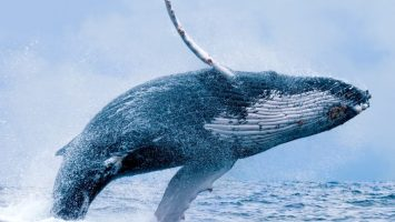 Market Outlook: Crypto Whale Tales and China's Blockchain Hype 4