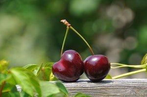 cherry pair fruits sweet 162689