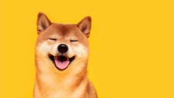 shiba inu soars knocking dogecoin down a notch 20 holders own 75 of the shib supply