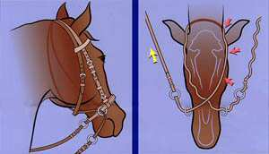 diagram showing function of bitless bridle