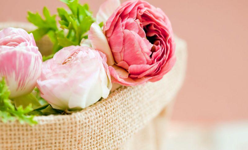 božur, cvijet