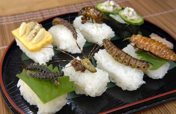 Insect Sushi Sushi Suddenly Lost Its Mojo  Bit Rebels