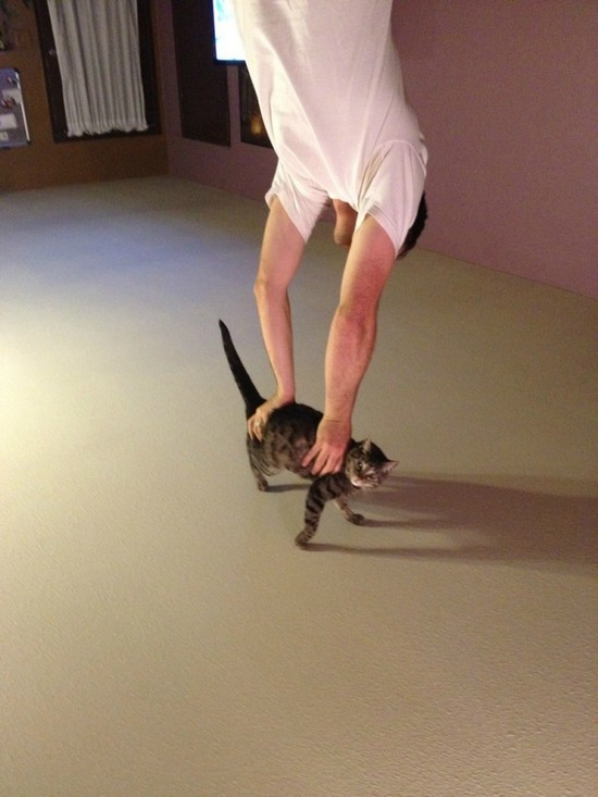 Handstand on a cat