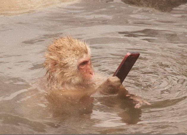 Is your phone waterproof