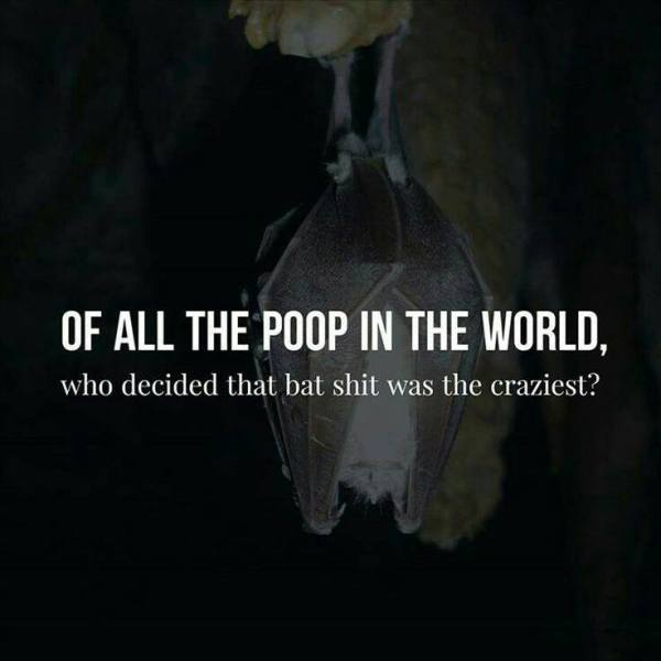 of-all-the-poop-in-the-world