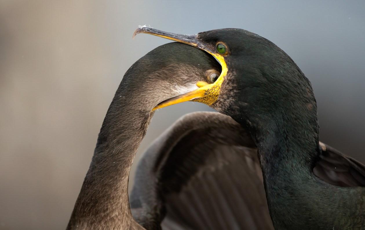 bird-mouth.jpg