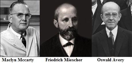 Oswald Avery ve Friedrich Miescher