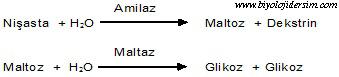 enzimlerin takım halinde çalışması