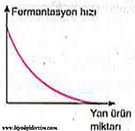 fermentasyona ürün miktarı etkisi