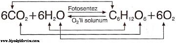 fotosentez denklemi