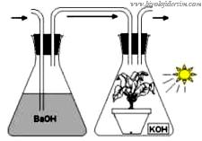 fotosenteziçin CO2 gereklidir