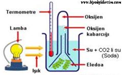 fotosentezde ışık etkisi