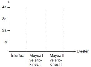 dna miktarı grafiği