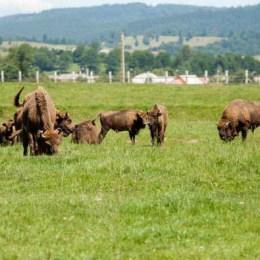 Turismul începe să se dezvolte lângă rezervația de zimbri. Primul pas, un centru de informare turistică