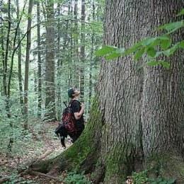 În județul Brașov sunt peste 4.300 de hectare de păduri virgine