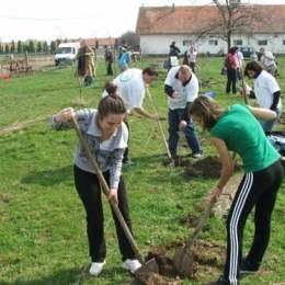 """Legea """"Brașovului verde"""" a devenit oficială: cine construiește o locuință este obligat să planteze un pom"""
