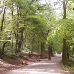 Ziua Mondială a Mersului pe Jos, sărbătorită cu o plimbare organizată prin Centrul Brașovului