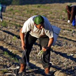 Firmele din România pot recruta lucrători pentru muncă sezonieră, pe Bestjobs