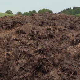 """Șase comisari de mediu au căutat azi sursa mirosului pestilențial din oraș. """"Nu avem echipamente, mergem după nas"""""""