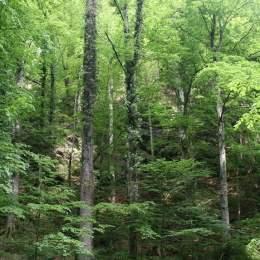 Regia Pădurilor Kronstadt va împăduri anul acesta 17,9 hectare cu circa 95.000 de puieți de molid, brad și gorun