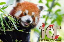 Zoo Brașov vă invită la ziua lui Peggy, singurul panda roșu din România, pentru a afla o serie de lucruri mai puțin știute despre această specie