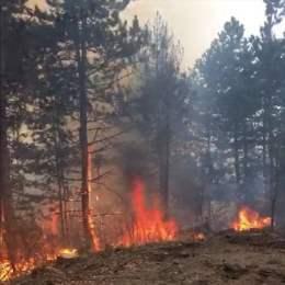 Pădurile din Brașov sunt cuprinse de flăcări. Un nou incendiu de pădure a fost semnalat pe 5 hectare din Zărnești