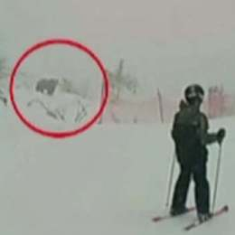 Mesaj Ro-Alert: Un urs a ieșit la plimbare în zona Pârtiei Clăbucet