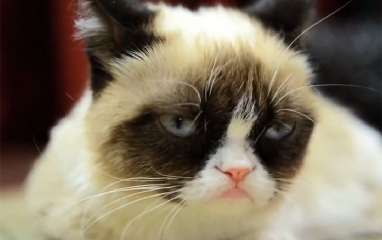 How a Cat Makes Millions by Being Grumpy