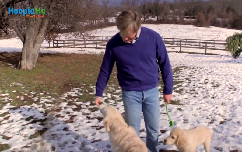 Passion Beats Fancy Job Titles: This Man Left Corporate America and Pursue his Passion for Golden Retrievers