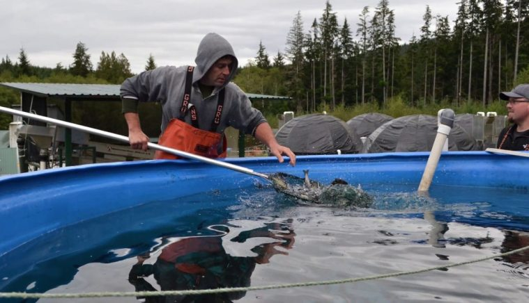 9 Reasons Why the World Needs More Salmon Farming