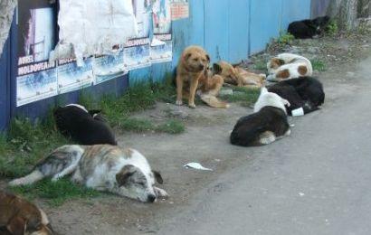 Ambasada Chinei ar putea fi sesizata în cazul declarațiilor lui Romanescu, pe tema câinilor comunitari