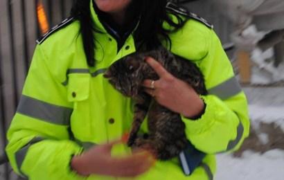 Poliția Animalelor din Gorj face angajări