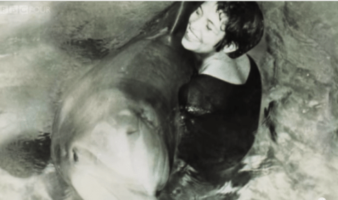 A porpoise driven life? Woman has sex with a dolphin