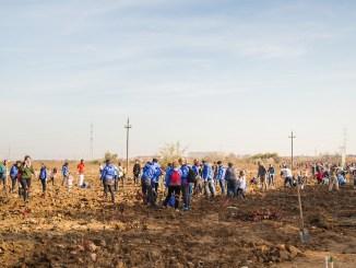 Acțiune de plantare organizată de Daikin România. FOTO thebucharests.ro
