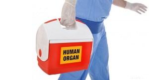 organ-nakli-transplant-bizsiziz