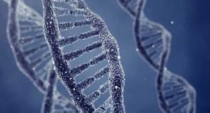 dna-onarimina-yardim-eden-proteinin-yapisi-cozuldu-bizsiziz