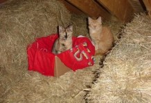 Save Kittens – Support the Kitten Bill reducing cat overpopulation