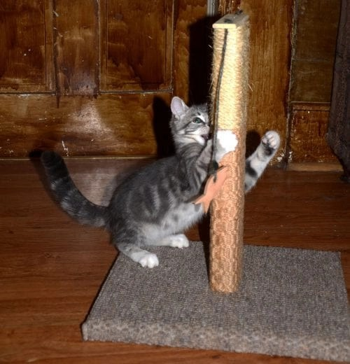 Cat Trees and Scratching Posts make life easier