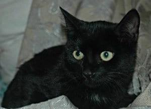 BlackCat_300_zps165f578e