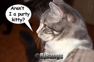 Lenny a  handsome kitty