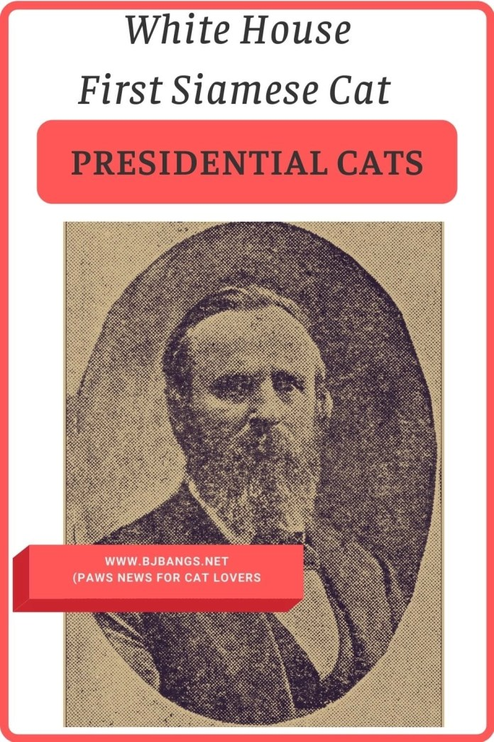 Pin of President Rutherford B. Hayes having the first Siamese Cat at The White House